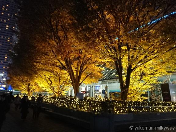 東京ドーム いちょうライトアップ