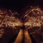 あたたかな光に包まれて。<br>〜中目黒ジュエルドーム〜 東京都心イルミめぐり その5