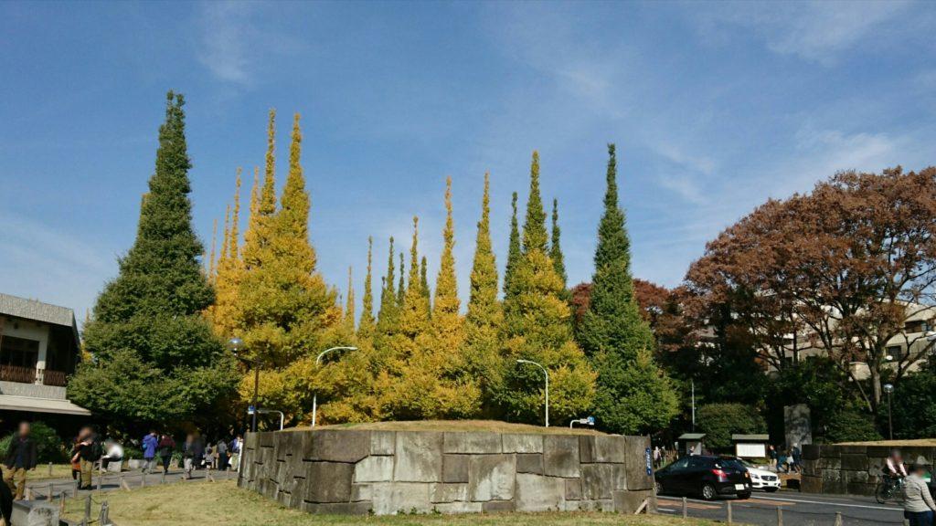 神宮外苑いちょう並木入口