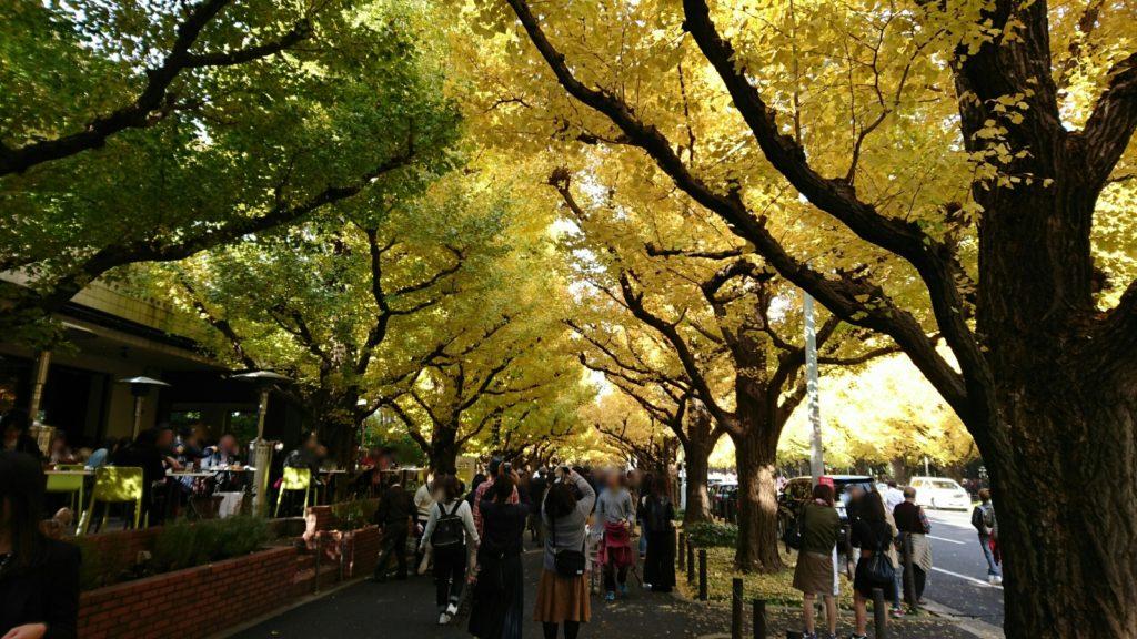 神宮外苑いちょう並木西側歩道