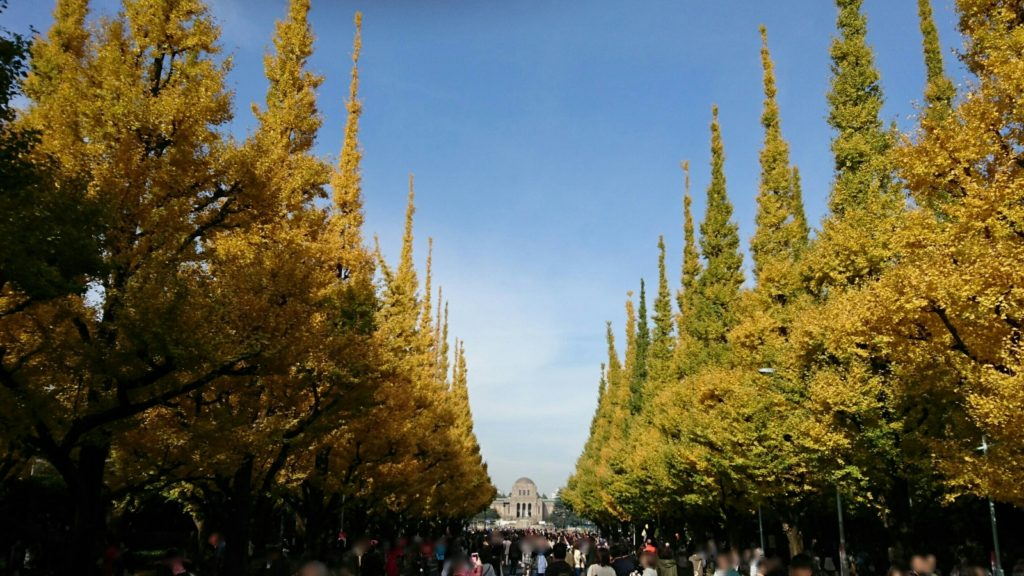 神宮外苑いちょう並木中央2