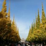 神宮外苑いちょう並木で秋を堪能。