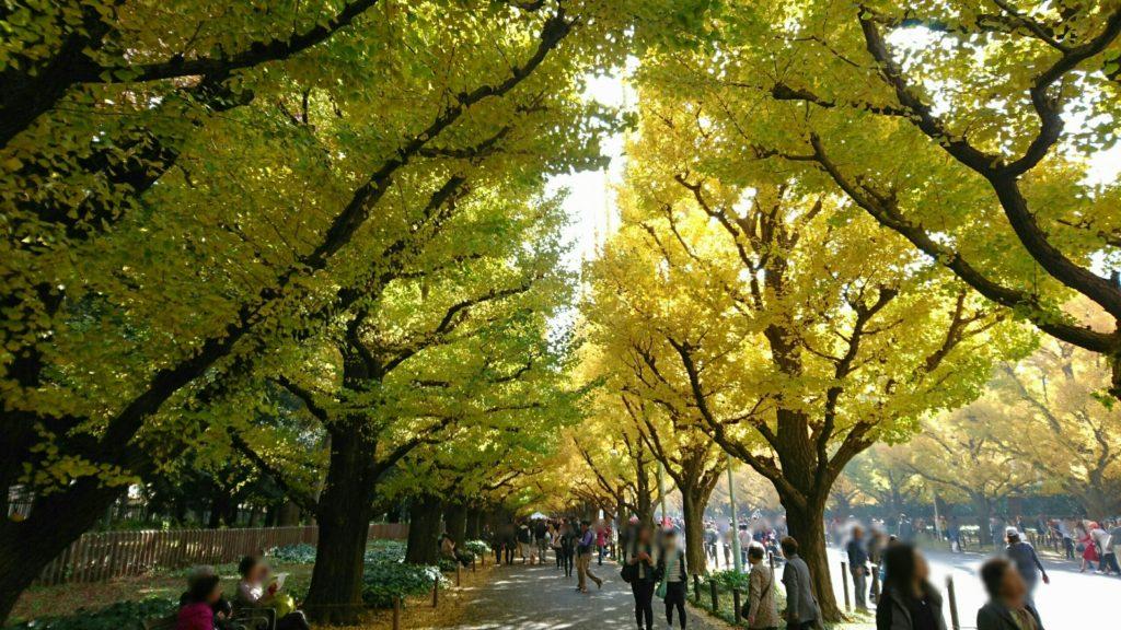 神宮外苑いちょう並木東側歩道