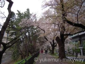 桜と電車・飯田橋駅付近・東側