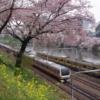 桜と電車・飯田橋駅付近のお堀の桜
