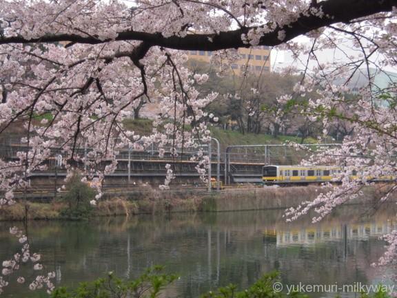 桜と電車・飯田橋駅付近・西側 JR東日本中央・総武緩行線E231系
