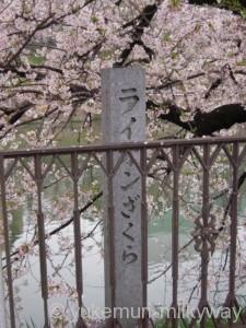 桜と電車・飯田橋駅付近・西側