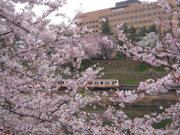 桜と電車・飯田橋駅付近・西側 JR東日本中央線快速E233系