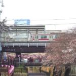 桜と電車・中目黒駅と目黒川の桜