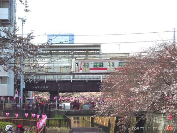 桜と電車・中目黒駅 1番ホーム 東急5050系