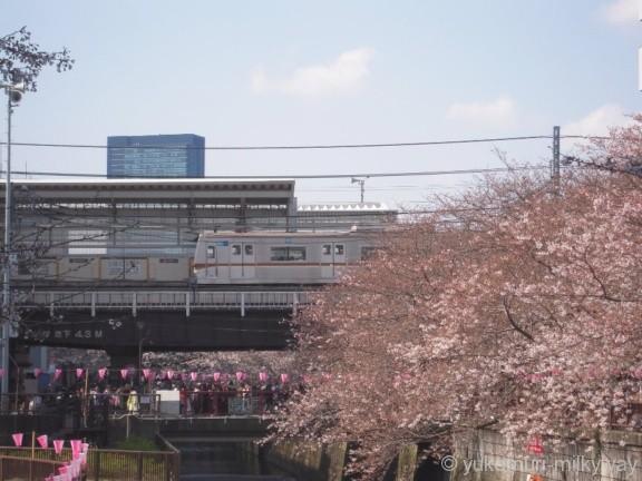 桜と電車・中目黒駅 1番ホーム 東京メトロ7000系