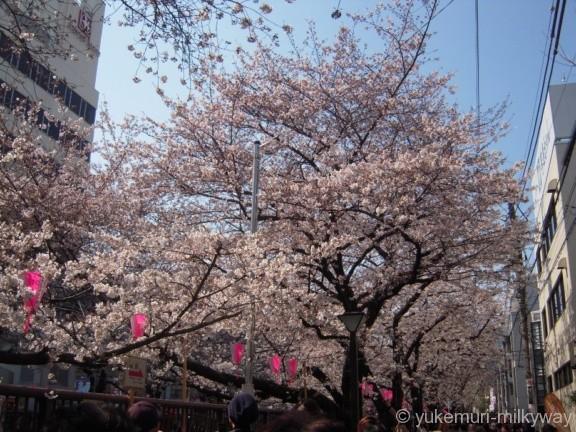 中目黒駅 目黒川の桜